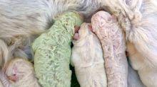 Welpe wird mit grünem Fell geboren und bekommt den perfekten Namen