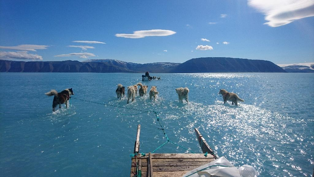 Sled dogs wade through standing water on the sea ice during an expedition in northwestern Greenland, whose ice sheet may have completely melted within the next millennium if greenhouse gas emissions continue at their current rate, a study has found (AFP Photo/Steffen Olsen)