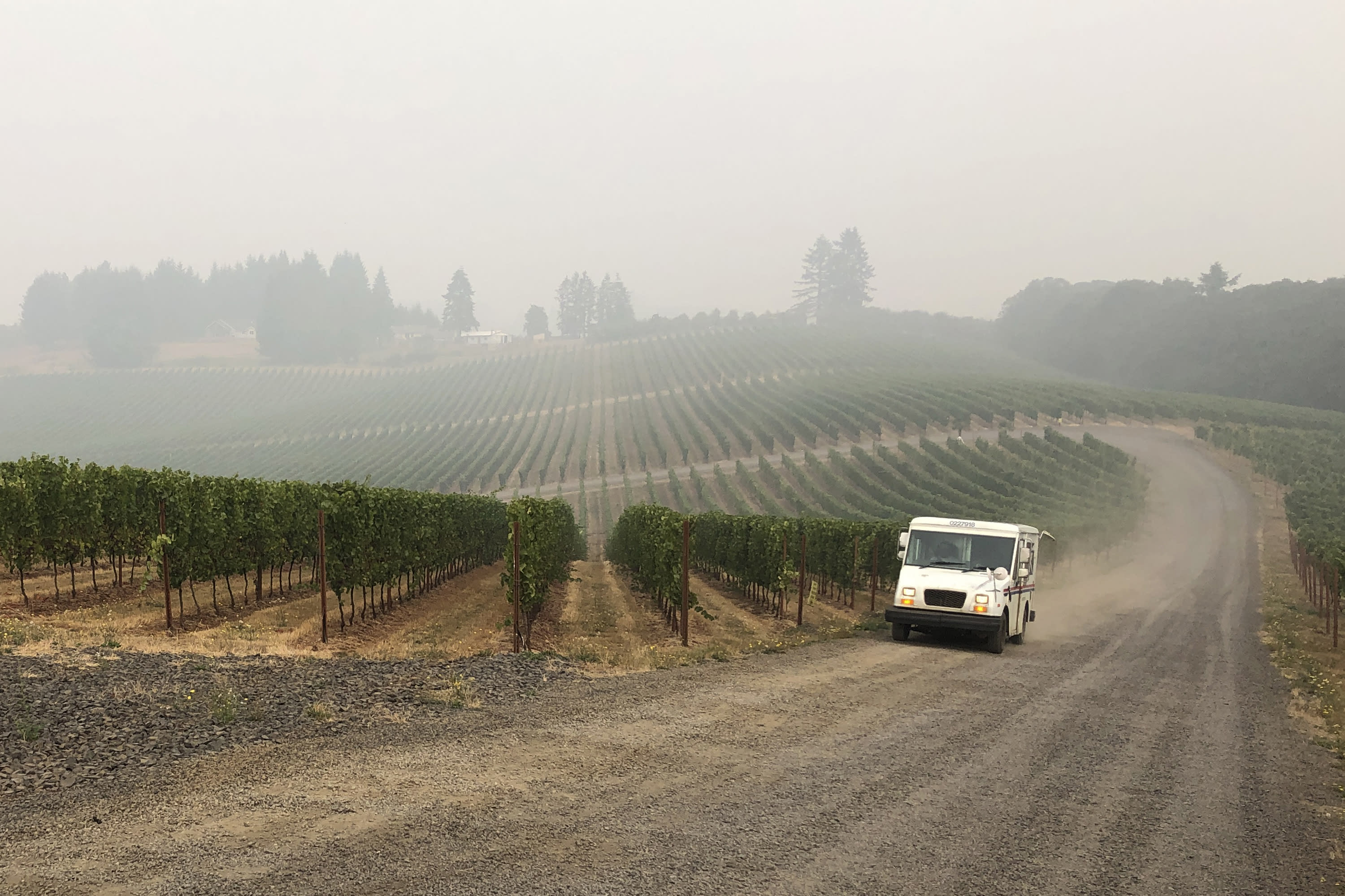 A U.S. postal delivery vehicle drives past at a smoke-shrouded vineyard in Salem, Ore., on Wednesday, Sept. 16, 2020. Smoke from the West Coast wildfires has tainted grapes in some of the nation's most celebrated wine regions. The resulting ashy flavor could spell disaster for the 2020 vintage. (AP Photo/Andrew Selsky)