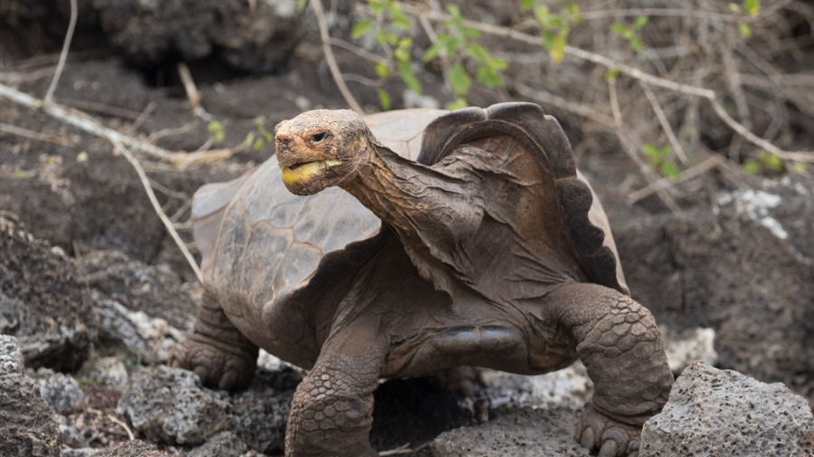 Turtle fathers 40 per cent of its species