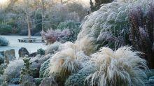 How to keep ornamental grasses looking smart in winter, by gardening expert Helen Yemm