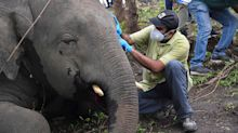 Mystery surrounds death of 18 elephants 'hit by lightning'