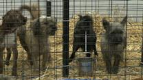 Pet Shop Owners Faceoff Against Anti-Puppy Mill Groups