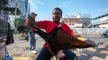'Worse' pandemic on horizon unless world deals with wildlife markets