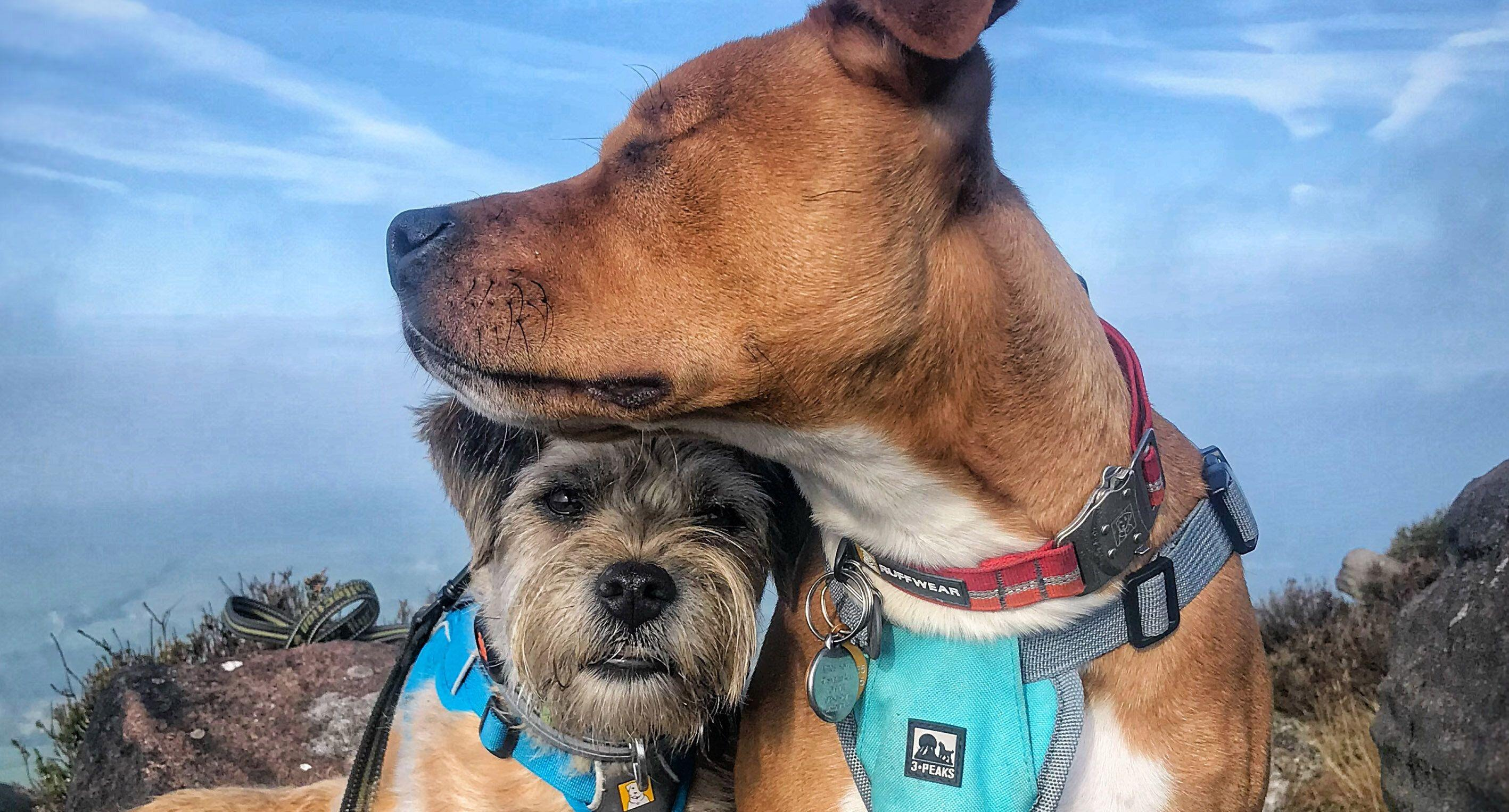 Blind pooch has guide dog as his only friend