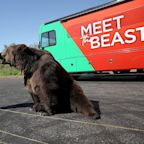 California Candidate Calling Himself 'the Beast' Is Campaigning with a 1,000-Lb. Bear