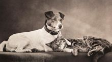 How the Victorians turned mere beasts into man's best friends