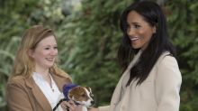 El efecto Meghan Markle: llueven peticiones para adoptar cachorro