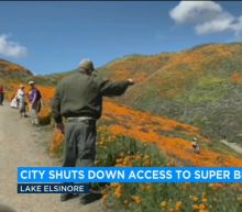 'This weekend has been unbearable:' Town ends access to massive canyon flower bloom after tourist nightmare