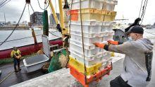 Brexit, una amenaza devastadora para la pesca belga