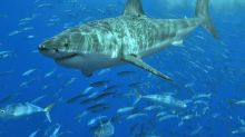 New Zealand surfer airlifted to hospital after shark attack