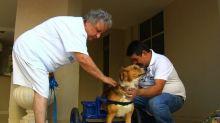 Brasileiro cria cadeira de rodas para animais deficientes