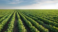 Why GMO Crops (Probably) Can't Compete for This $22 Billion Ingredient Opportunity