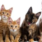 Wake County animal shelters brace for explosion of kittens