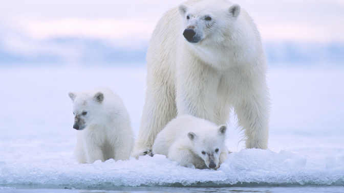 Australia and Norway in frosty Twitter exchange over polar bear tourist warning