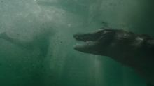Tense first trailer for Sam Raimi's 'Crawl' looks like 'Jaws' with alligators