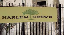 Harlem Grown promotes healthy eating where '98% of our families are on food stamps'