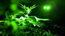 Cannabis company Canopy has a decade-long tailwind: Analyst