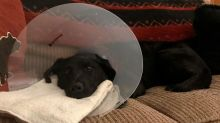 Dog owner's heartbreaking plea after vicious attack