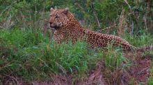 Los Big Five de un gran safari africano