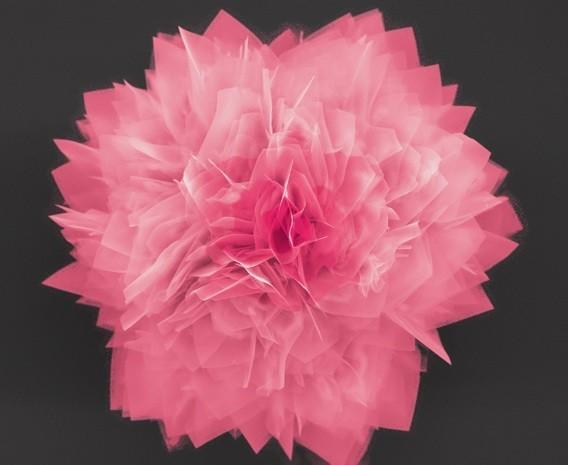 NC State nanoflowers can boost battery and solar cell capacity, make great prom accessories