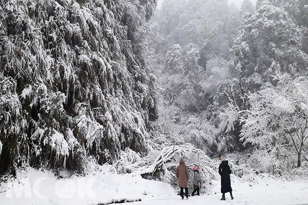 太平山雪景 (圖片提供/molly888666)