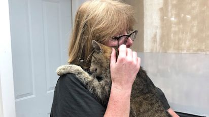 Cat Who Had Been Missing for 11 Years Is Finally Reunited with His Owner in New York