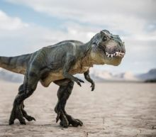 Baby T rex goes on sale on eBay, sparking paleontologists' outcry