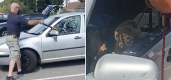 Man rescues dog locked in car during heatwave