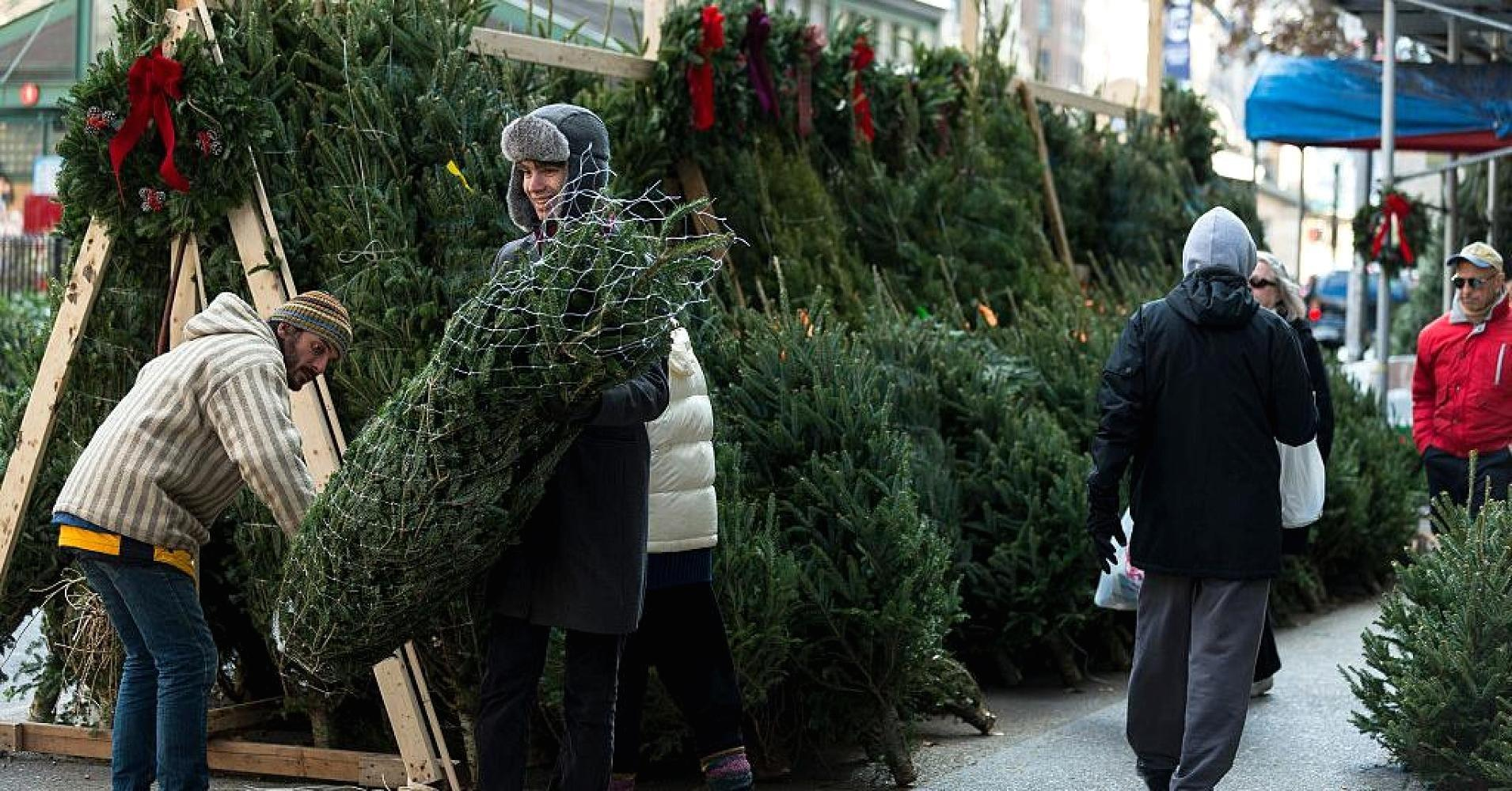 Here 39 S How You Can Keep Your Christmas Tree Alive For The