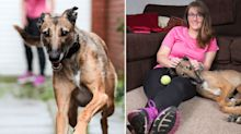 Dog who broke record for longest time in shelter is finally adopted