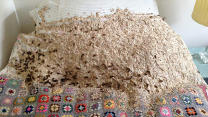 5,000 Wasps Build Giant Nest In Guest Room