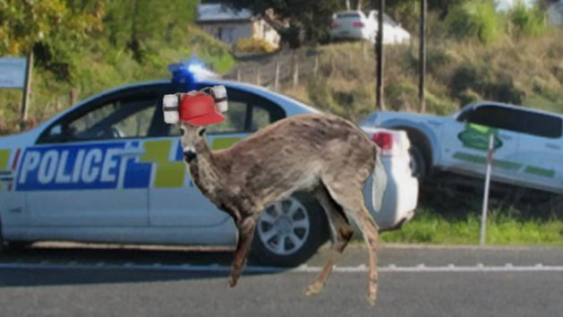 Drunk Deer Forces Driver Into Ditch