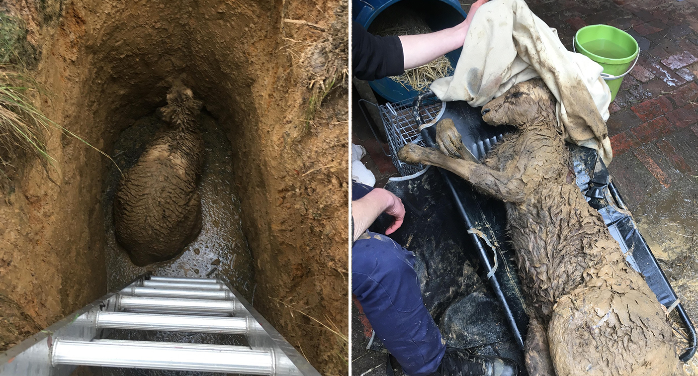 'They can take your eye out': Delicate rescue of kangaroo trapped in hidden mineshaft