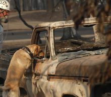 Camp Fire Leaves At Least 77 Dead While Almost 1,300 Remain Unaccounted For