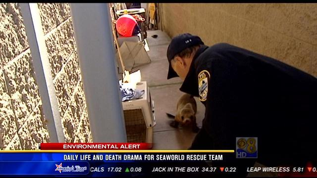 Daily life and death drama for SeaWorld rescue team