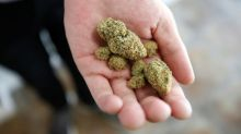 Marijuana Business Daily CEO on weed stocks: Some will be Amazon.coms, some will be Pets.coms