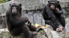 États-Unis: une fille de 6 ans récolte plus de 170.000 dollars pour sauver le zoo de sa ville