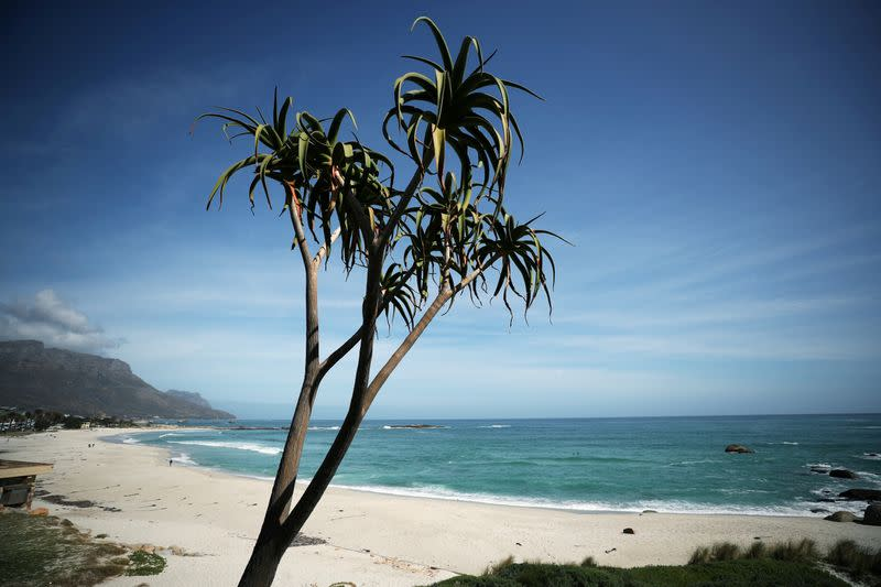 FILE PHOTO: An aloe stands over Camps Bay beach, normally popular with foreign tourists, in Cape Town,
