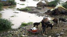 Jóvenes desarrollan una aplicación para proteger animales en desastres naturales