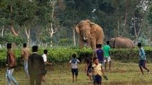 Climate Change  Makes  West Bengal A Human-Elephant Conflict Zone