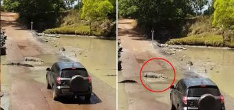Terrifying drive across croc-infested waters