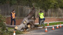 3 killed by falling trees as storm lashes Australian city