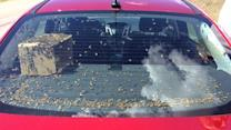 Highway Patrol Stops Car Full Of Bees