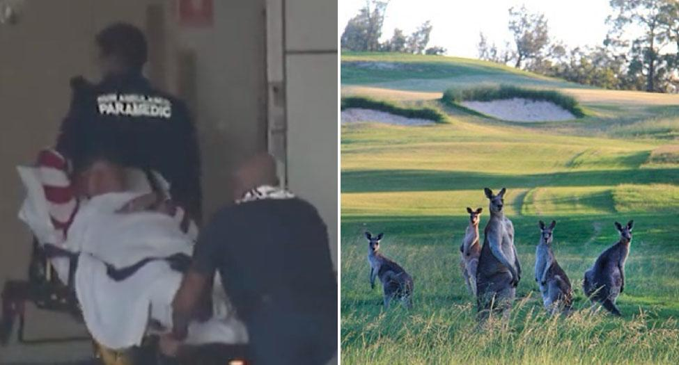 Man, 52, attacked by kangaroo on Sydney golf course