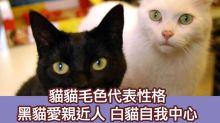 獸性大發:從貓貓毛色睇出唔同性格 黑貓白貓灰貓大不同