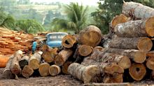 Abholzung des Amazonas-Regenwaldes legt zu