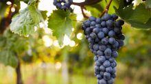 El vino español, en peligro de extinción por el cambio climático