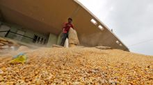 India's NAFED tenders to purchase 100,000 tonnes corn
