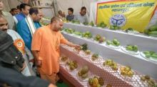'Yogi mango' among 700 varieties at UP fest